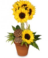 POT O' SUNFLOWERS Topiary Arrangement in Council Bluffs, IA | ABUNDANCE A' BLOSSOMS FLORIST