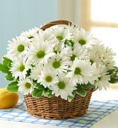 White Daisy Basket  Also available in  MIXED colors!!!