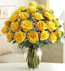 24 Yellow Roses  PREMIUM LONG STEM ROSES