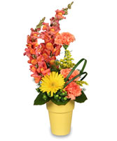 IT'S A SNAP! Bouquet in Michigan City, IN | WRIGHT'S FLOWERS AND GIFTS INC.