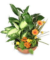 BOTANICAL GARDEN Planter w/ Fresh Cut Flowers in Olathe, KS | THE FLOWER PETALER