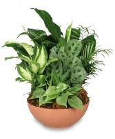 GIFT OF GREEN Dish Garden of Plants in Advance, NC | ADVANCE FLORIST & GIFT BASKET