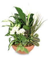 BLOOMING DISH GARDEN Green & Blooming Plants in Lutz, FL | ALLE FLORIST & GIFT SHOPPE