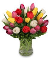 TIP TOP TULIPS Bouquet in Bristol, CT | DONNA'S FLORIST & GIFTS