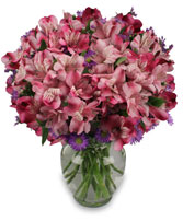 MAGENTA AGENDA Flower Arrangement in Norwalk, OH | HENRY'S FLOWER SHOP
