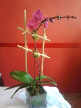 Purple (or White) Orchid Plant Blooming plants