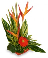 TROPICAL HEAT Arrangement in Picture Butte, AB | FLARE 'N FLOWERS