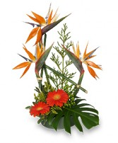 ISLAND INFLUENCED Arrangement in Mineola, TX | MINEOLA FLOWER & GIFT SHOP