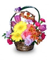 SPRING ARRIVAL Flower Basket in Bracebridge, ON | CR Flowers & Gifts ~ A Bracebridge Florist