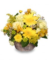 SUNNY FLOWER PATCH in a Basket in Bath, NY | VAN SCOTER FLORISTS 