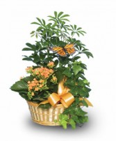 EUROPEAN GARDEN Assorted Plant Basket in Clarksburg, MD | GENE'S FLORIST & GIFT BASKETS