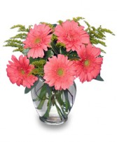 DAISY'S DELIGHT   Pink Gerberas in Michigan City, IN | WRIGHT'S FLOWERS AND GIFTS INC.