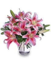 STUNNING STARGAZERS  Arrangement in Zachary, LA | FLOWER POT FLORIST