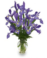 FLEUR-DE-LIS Iris Vase in Santa Cruz, CA | BOULDER CREEK FLOWERS & DESIGN CO.
