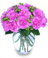 FANCY-FREE FUCHSIA Flowers for Any Occasion in Springfield, MA | REFLECTIVE-U  FLOWERS & GIFTS