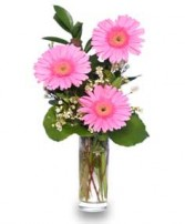 THANK YOU BLOOMS of Pink Gerberas in Edmonton, AB | JANICE'S GROWER DIRECT