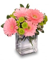 FRUIT SORBET Gerbera Bouquet in Milton, MA | MILTON FLOWER SHOP, INC