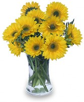 HELLO SUNSHINE! Vase of Flowers in Pembroke, MA | CANDY JAR AND DESIGNS IN BLOOM