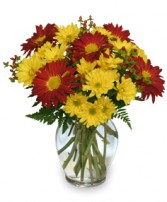 RED ROVER & YELLOW DAISY  Bouquet of Flowers in Charlottetown, PE | BERNADETTE'S FLOWERS