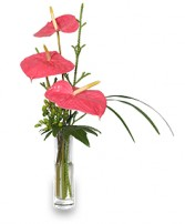 BEYOND A BUD VASE Arrangement in Largo, FL | ROSE GARDEN FLOWERS & GIFTS INC.