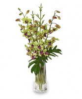 DIVINE DENDROBIUMS Vase of Orchids in Great Falls, MT | PURPLE CAT CREATIONS