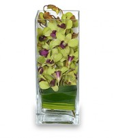 LIVELY LIME GREEN Orchid Arrangement in Cut Bank, MT | ROSE PETAL FLORAL & GIFTS