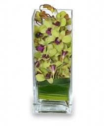 LIVELY LIME GREEN Orchid Arrangement