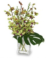OUT OF THIS WORLD Orchid Arrangement in Haworth, NJ | SCHAEFER'S GARDENS