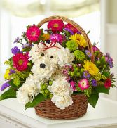 a-Dog-Able in a basket in Jonesboro, AR | HEATHER'S WAY FLOWERS & PLANTS
