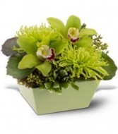 ALL IN GREEN WITH CYMBIDIUM ORCHIDS
