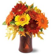 Autumn Gerbera's THX2010 in Bracebridge, ON | CR Flowers & Gifts ~ A Bracebridge Florist