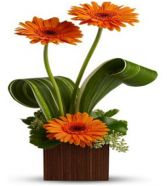   SUNSHINE CONTEMPORARY  FLOWER ARRANGEMENT  in Rockville, MD | ROCKVILLE FLORIST & GIFT BASKETS
