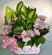 Garden Delight Indoor Plant Basket