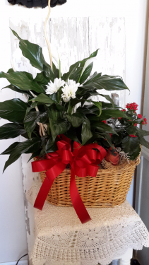 Basket with a bird Peace lilly and blooming plant