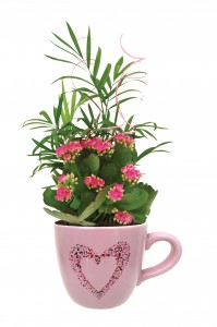 Be My Valentine Mug Tropical Green and Flowering Plants in container