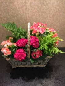 Begonia Garden With Fern  Blooming