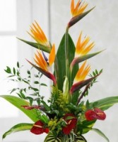 Birds in Paradise  by Enchanted Florist
