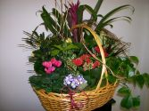 Blooming Garden Basket Plants in Naperville, IL | DLN FLORAL CREATIONS