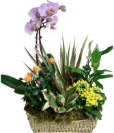 BLOOMING GARDEN  BASKET in Rockville, MD | ROCKVILLE FLORIST & GIFT BASKETS