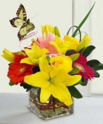 Bright and Cheery Butterfly Arrang