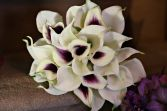 calla Lily bouquet - Harlequin white with purple