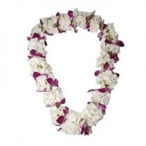 Carnation with Orchid  Lei
