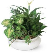 Ceramic Dish Garden in Winter Springs, FL | WINTER SPRINGS FLORIST AND GIFTS