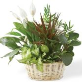 CLASSIC   DISH GARDEN in Rockville, MD | ROCKVILLE FLORIST & GIFT BASKETS