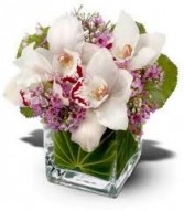 NB 4-Cymbidium orchids in a compact arrangement (Colors may vary)