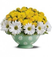 Daisy Colander Arrangement  in Eau Claire, WI | 4 SEASONS FLORIST INC.