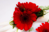 DAISY CORSAGE Prom Flowers