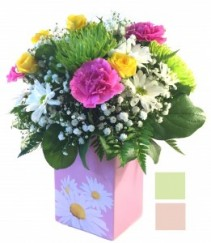 Dazzle with Daisies by Fendley Fresh Flowers in container