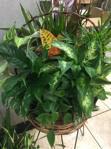 Dish Garden Live Plants in Boonsboro, MD | Mountainside Florist