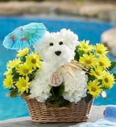 Doggie Paddle a-DOG-able in Mokena, IL | An English Garden Flowers & Gifts